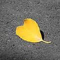 Yellow Heart by Amy Gallagher