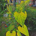 Yellow Heart Leaves IIi Photoart by Debbie Portwood