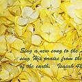 Yellow Hydrangea Isaiah 42v10 by Linda Phelps