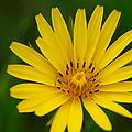 Yellow by Ivan Slosar