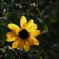 Yellow Jewel by Warren Thompson