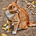 Yellow Kitty by Debbie Portwood