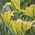 Yellow Lilies by Sharon Freeman