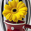 Yellow Mum In Pitcher  by Garry Gay