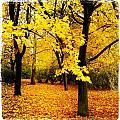 Yellow Park by Ferenc Farago - Photograph Art