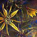 Yellow Passion by Ashley Kujan