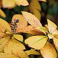 Yellow Petal Leaf With Sprig by Lorraine Devon Wilke