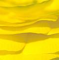 Yellow Petals by Patrick Kessler