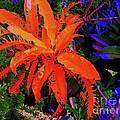 Yellow Plant 3 by Nina Kaye