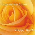 Yellow Rose Birthday Card by Michael Peychich
