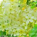 Yellow Shower Tree - 5 by Mary Deal