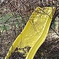 Yellow Slide by Todd Sherlock