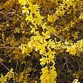 Yellow Strand by Sonali Gangane