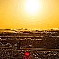 Yellow Sun by Priscilla De Mesa