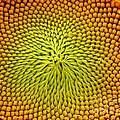 Yellow Temptation by Amalia Suruceanu