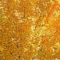 Yellow Tree Leaves by Kenny Bosak