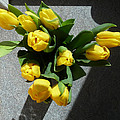 Yellow Tulips by Baato