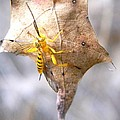 Yellow Wasp by Warren Thompson