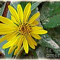 Yellow Wildflower by Debbie Portwood