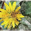 Yellow Wildflower Photoart by Debbie Portwood