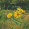 Yellow Wildflowers by Jennifer Kelly