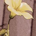 Yellow Wood Sorrel by Randall Thomas Stone