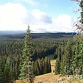 Yellowstone High Elevation Forest by Charles Robinson