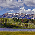Yellowstone National Park by Linda Dunn