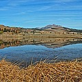 Yellowstone Reflections 9437 by Michael Peychich