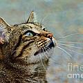 Yes I Am A Pretty Kitty by Debbie Portwood