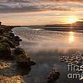 Ynys by Rory Trappe