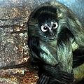 Yoga Monkey by Christy Phillips