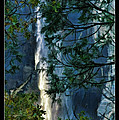 Yosemite Falls Through Trees by Blake Richards