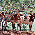 Young Bulls by Paul Louis Mosley