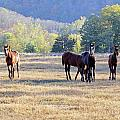 'youngsters In The Paddock' by PJQandFriends Photography