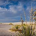 Yucca 1 by Sean Wray