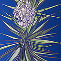 Yucca by Aimee Mouw