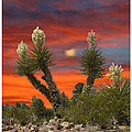 Yucca Blooming Sunset-moonset by Jack Pumphrey
