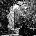 Yulee Sugarmill 2  Black And White by Judy Wanamaker