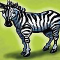Zebra by Kevin Middleton