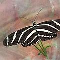 Zebra Longwing Butterfly-3 by Rudy Umans