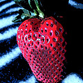 Zebra Strawberry by Kym Backland