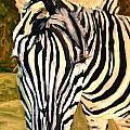 Zebra Stripes by Miriam  Schulman
