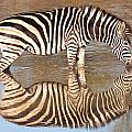 Zebra Times Two by George Cathcart