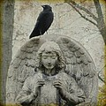 Zen Crow On Stone Angel by Gothicrow Images