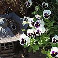 Zen Garden by Marcia Crispino