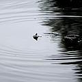 Zen Of Fishing by Marcia Crispino
