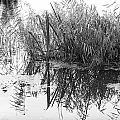 Zen Pond by David Resnikoff