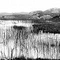 Zen Pond In Ireland by David Resnikoff