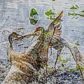 Zhandou by September  Stone